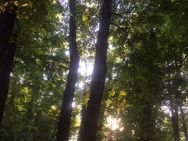 Il sole nel parco