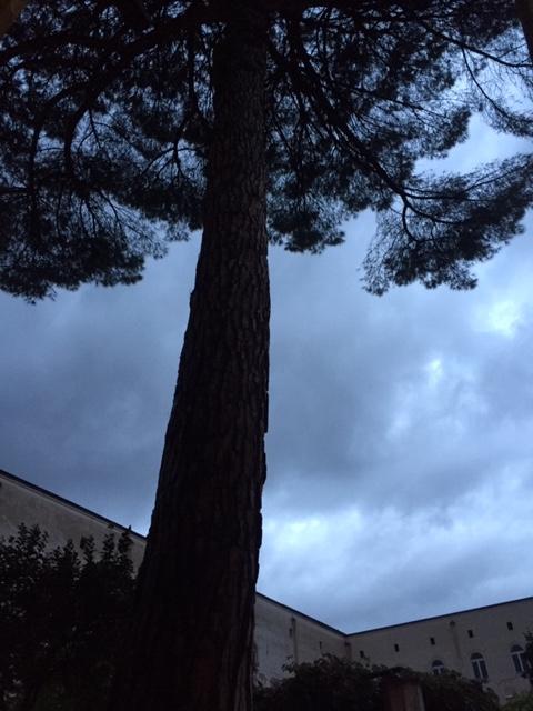 napoli albero
